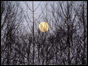 lune et arbre 1