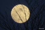 1ère lune